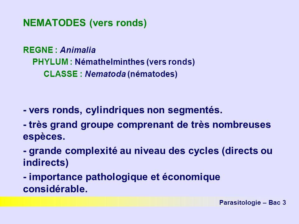 NEMATODES (vers ronds)