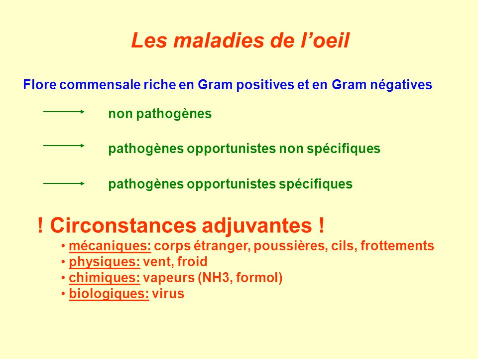 Flore commensale riche en Gram positives et en Gram négatives