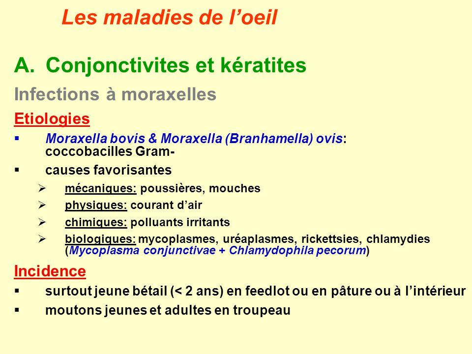 Conjonctivites et kératites