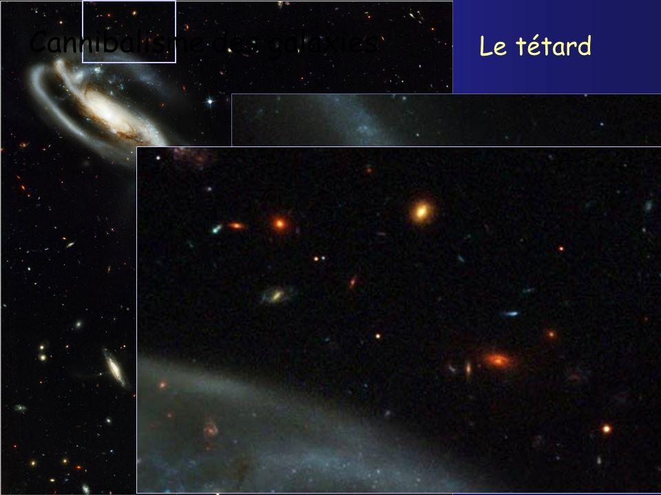 Cannibalisme des galaxies