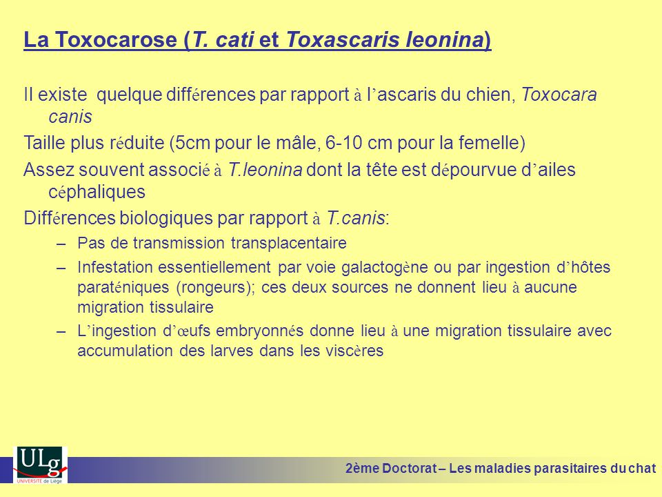 La Toxocarose (T. cati et Toxascaris leonina)