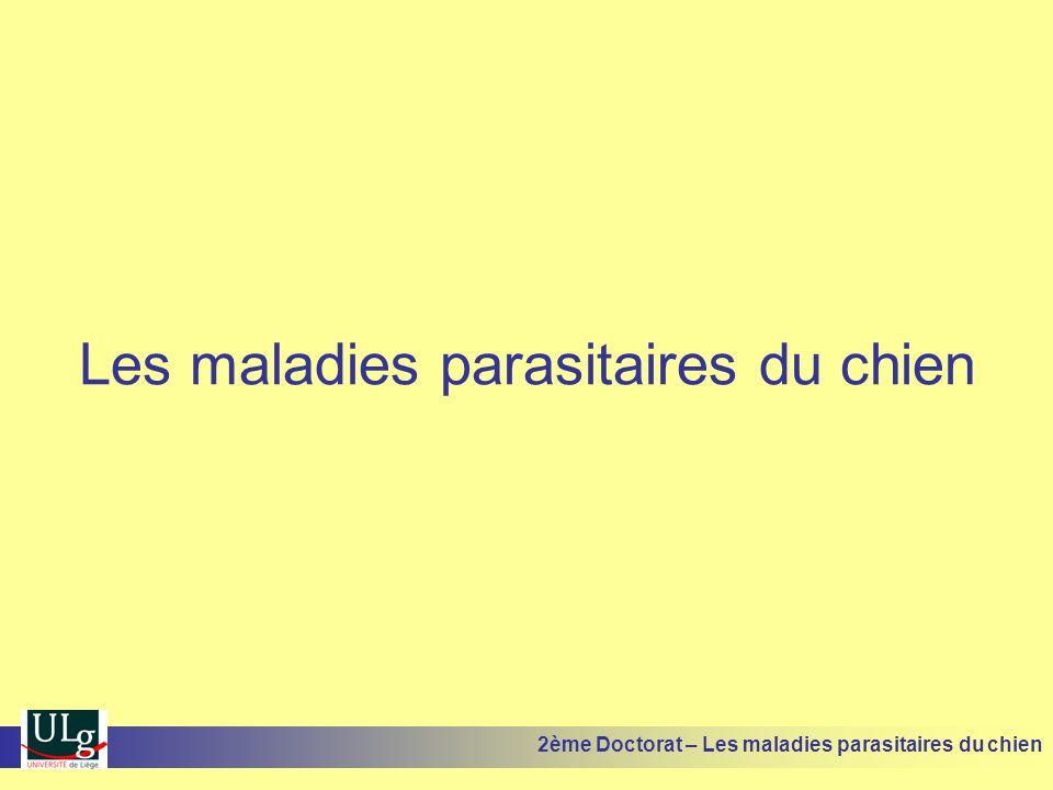 Les maladies parasitaires du chien