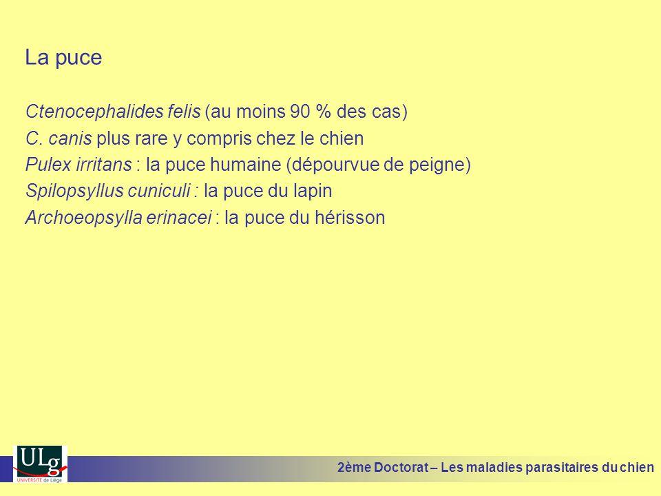 La puce Ctenocephalides felis (au moins 90 % des cas)
