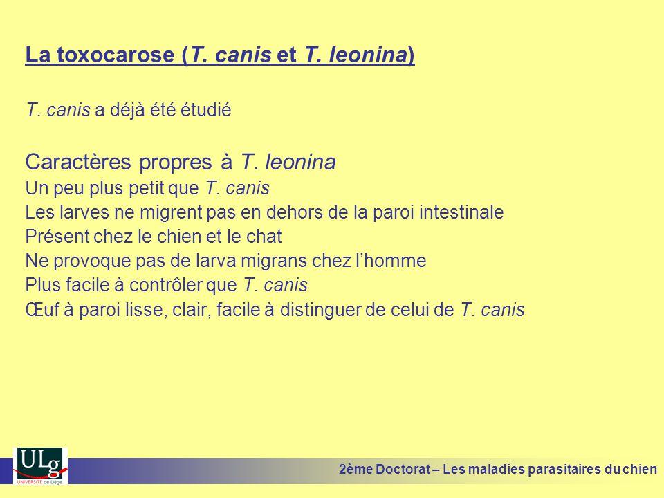 La toxocarose (T. canis et T. leonina)