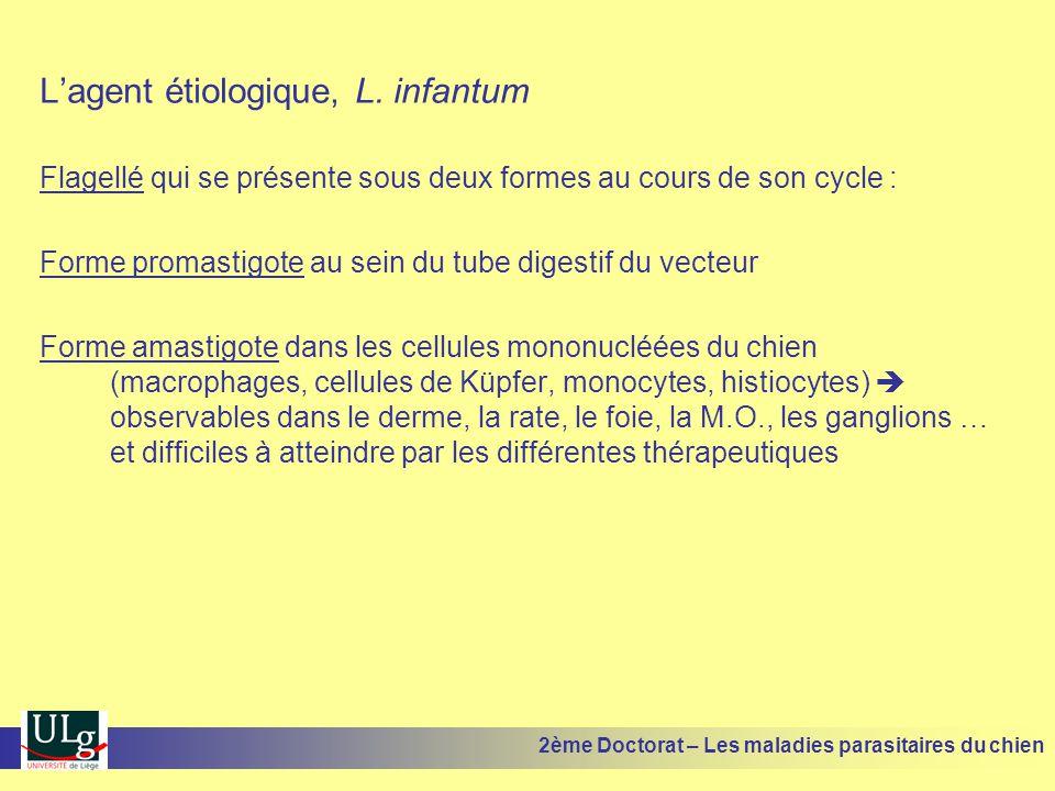 L'agent étiologique, L. infantum