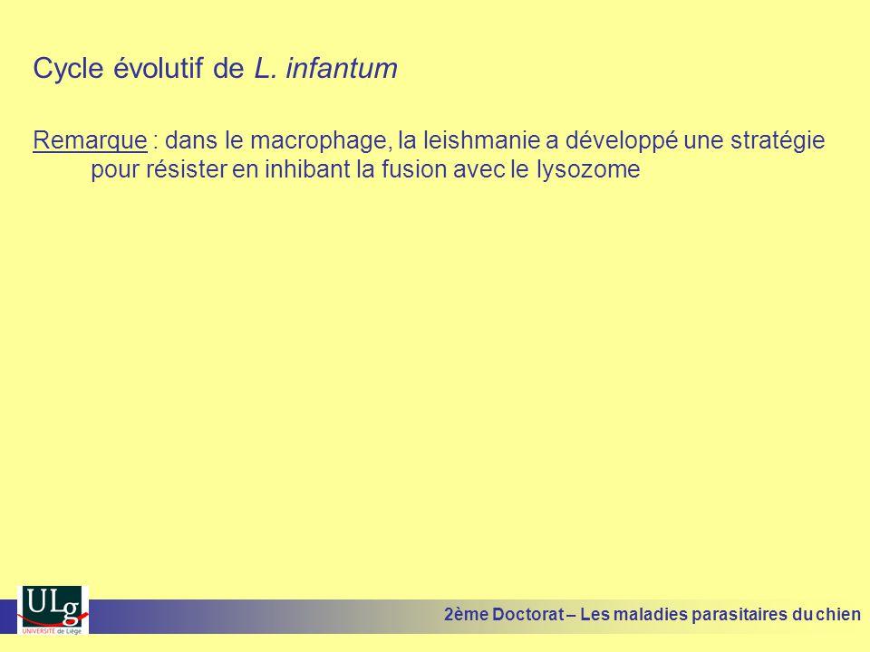 Cycle évolutif de L. infantum