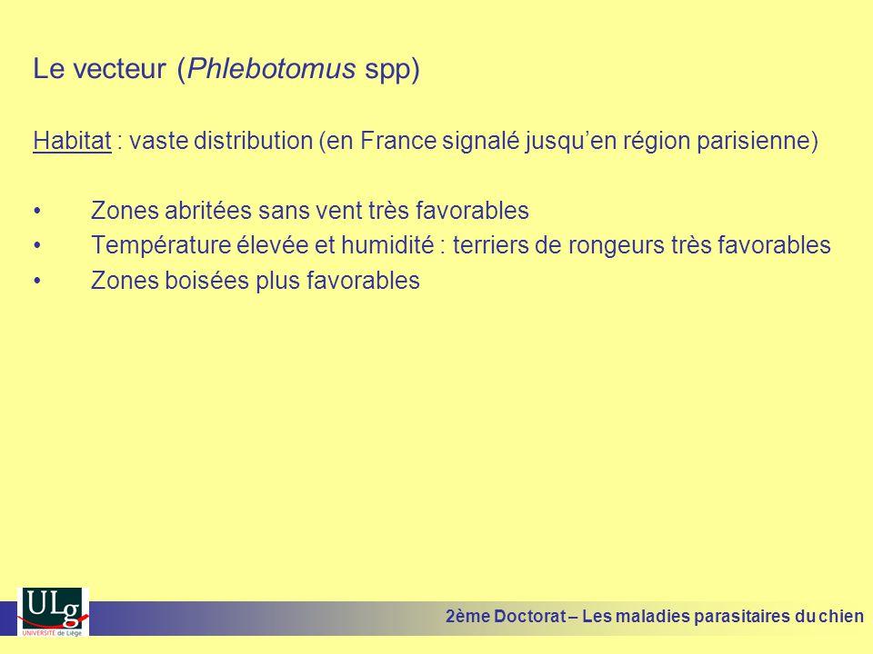 Le vecteur (Phlebotomus spp)