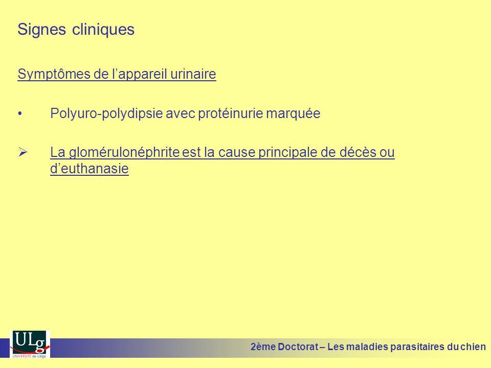 Signes cliniques Symptômes de l'appareil urinaire