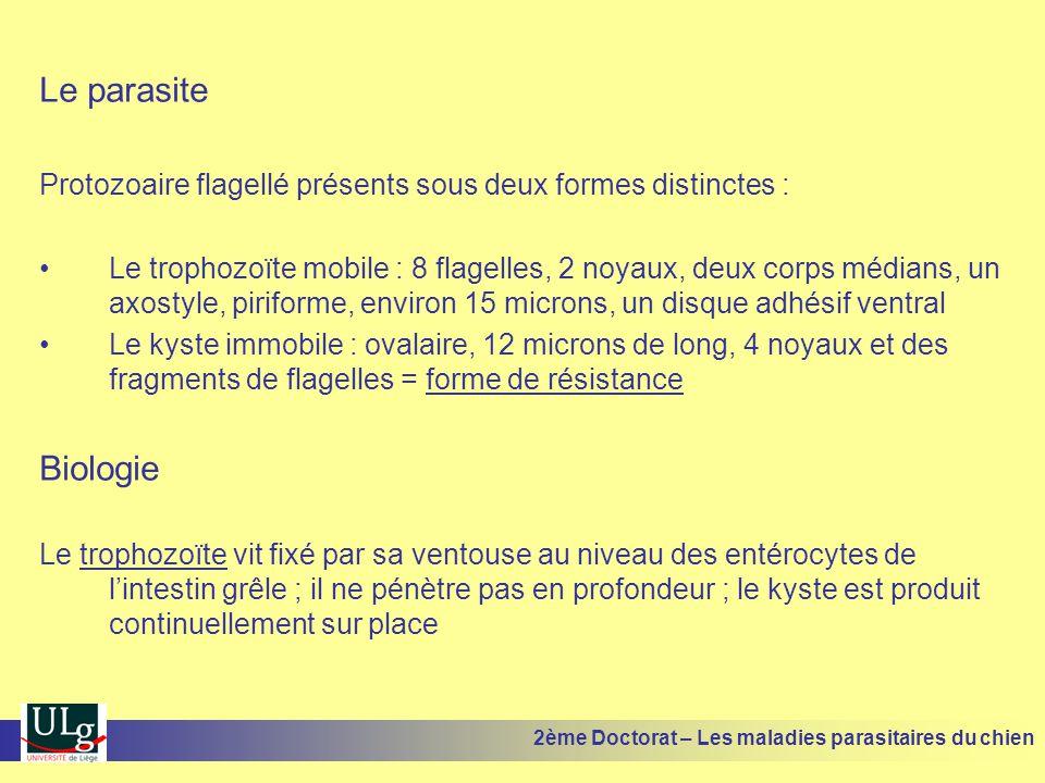 Le parasite Protozoaire flagellé présents sous deux formes distinctes :