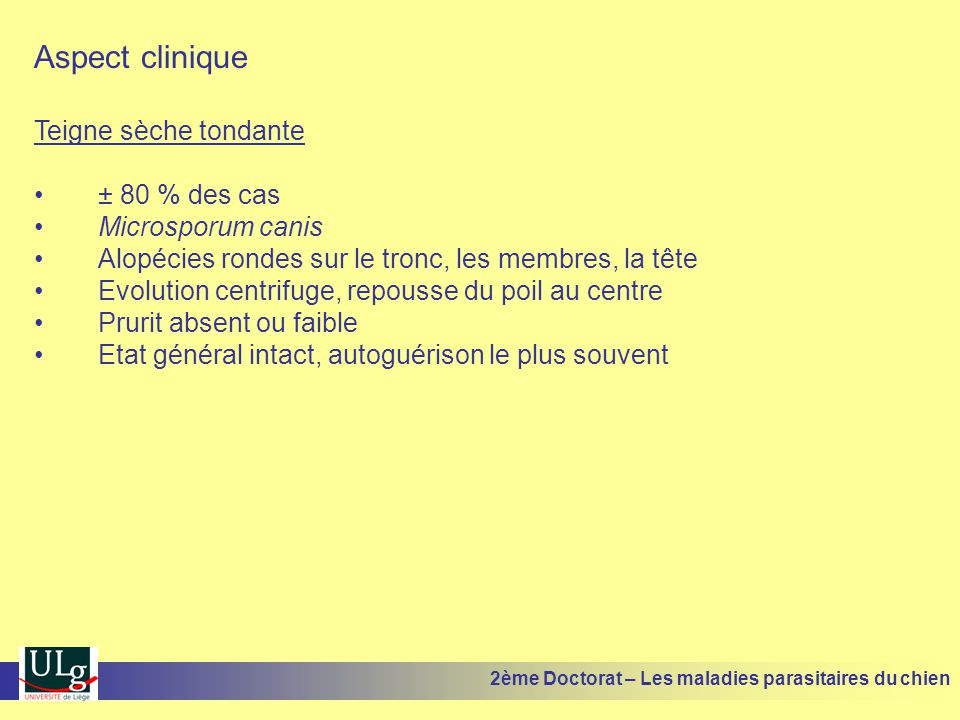 Aspect clinique Teigne sèche tondante ± 80 % des cas Microsporum canis