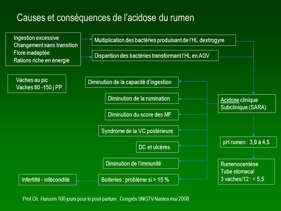 Causes et conséquences de l'acidose du rumen