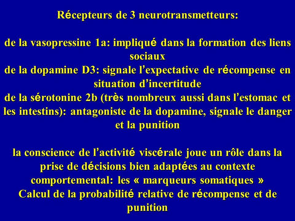 Récepteurs de 3 neurotransmetteurs: de la vasopressine 1a: impliqué dans la formation des liens sociaux de la dopamine D3: signale l'expectative de récompense en situation d'incertitude de la sérotonine 2b (très nombreux aussi dans l'estomac et les intestins): antagoniste de la dopamine, signale le danger et la punition la conscience de l'activité viscérale joue un rôle dans la prise de décisions bien adaptées au contexte comportemental: les « marqueurs somatiques » Calcul de la probabilité relative de récompense et de punition