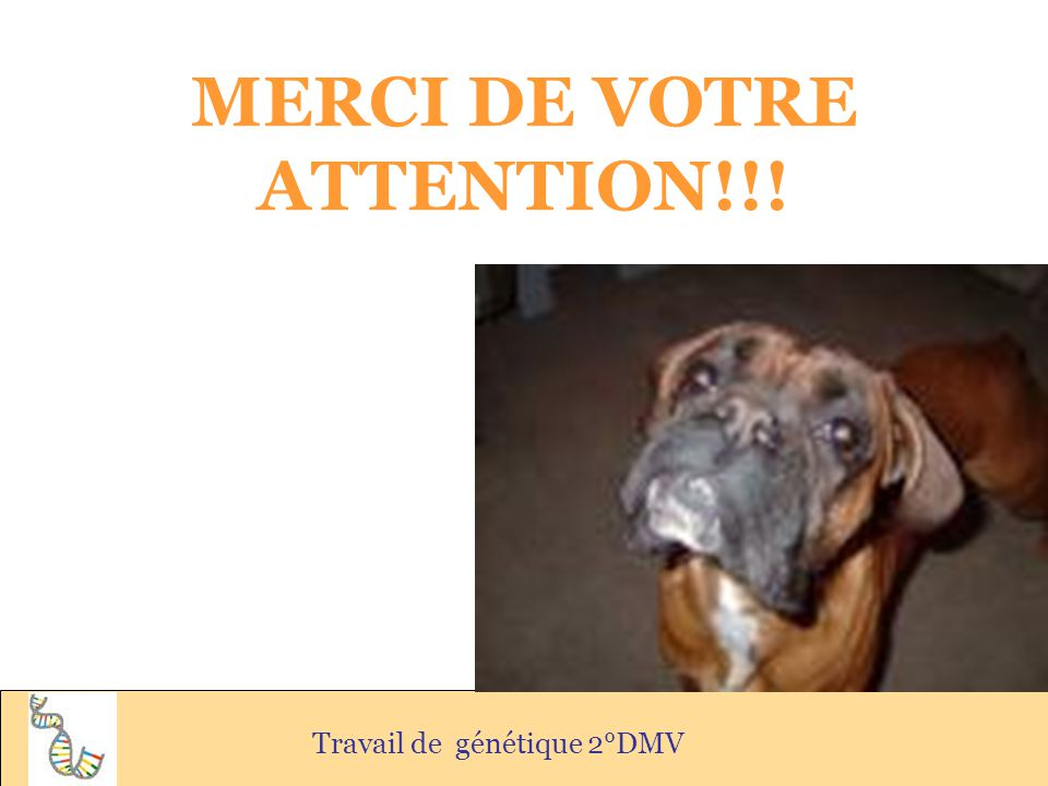 MERCI DE VOTRE ATTENTION!!!