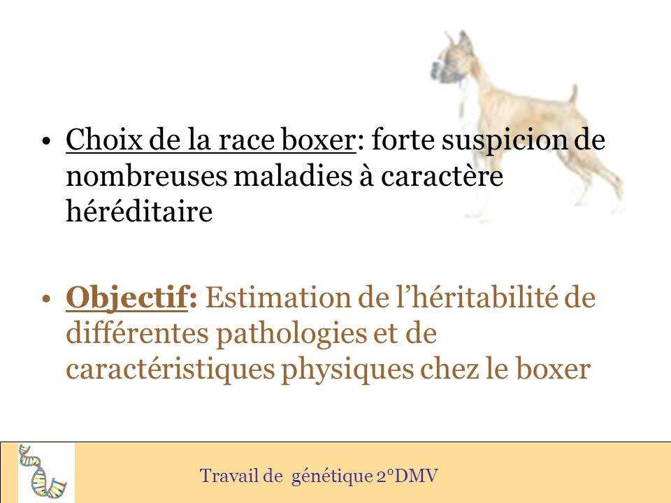 Choix de la race boxer: forte suspicion de nombreuses maladies à caractère héréditaire