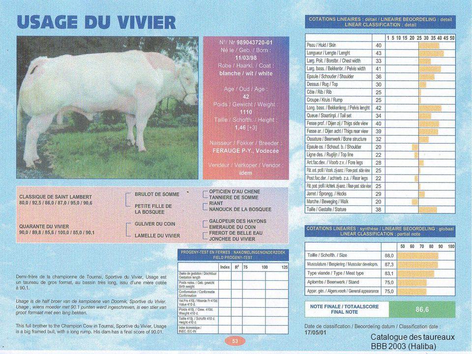 Catalogue des taureaux BBB 2003 (Haliba)