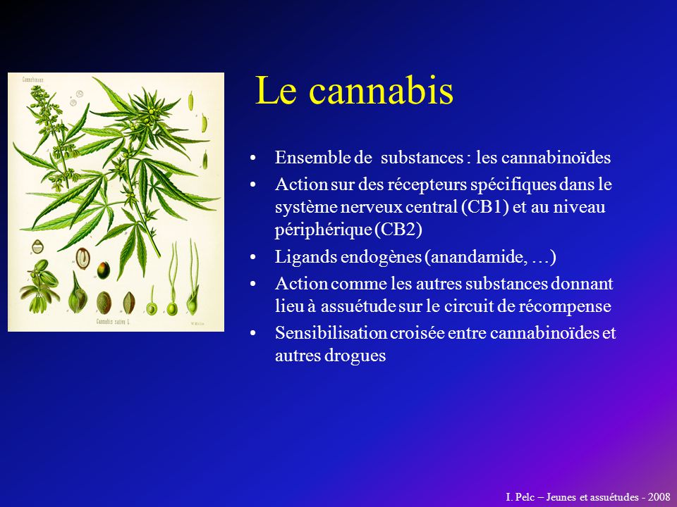 Le cannabis Ensemble de substances : les cannabinoïdes