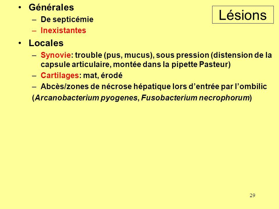 Lésions Générales Locales De septicémie Inexistantes