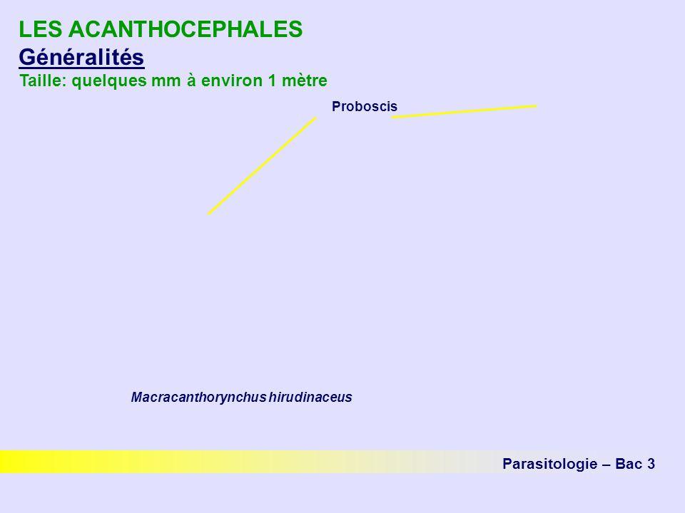 LES ACANTHOCEPHALES Généralités Taille: quelques mm à environ 1 mètre
