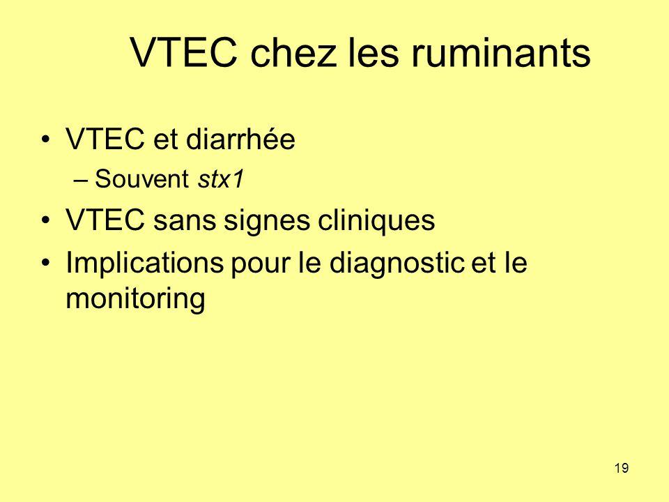 VTEC chez les ruminants