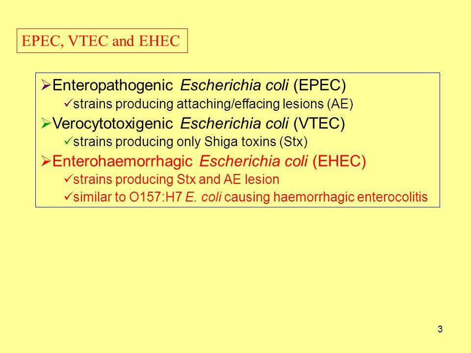 Enteropathogenic Escherichia coli (EPEC)