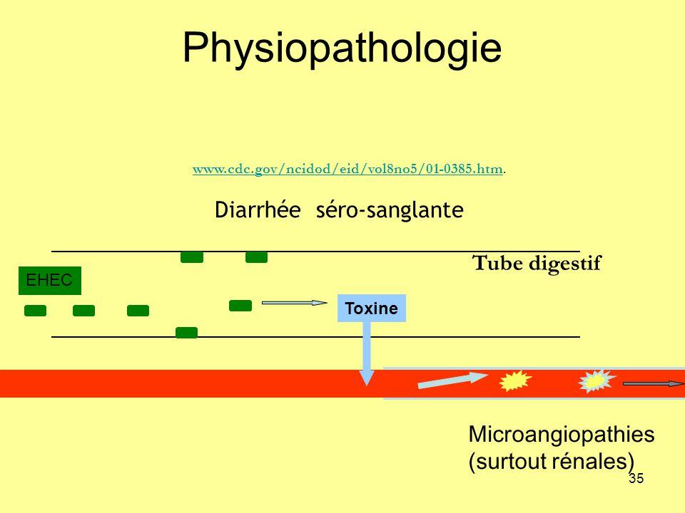 Physiopathologie Diarrhée séro-sanglante Tube digestif