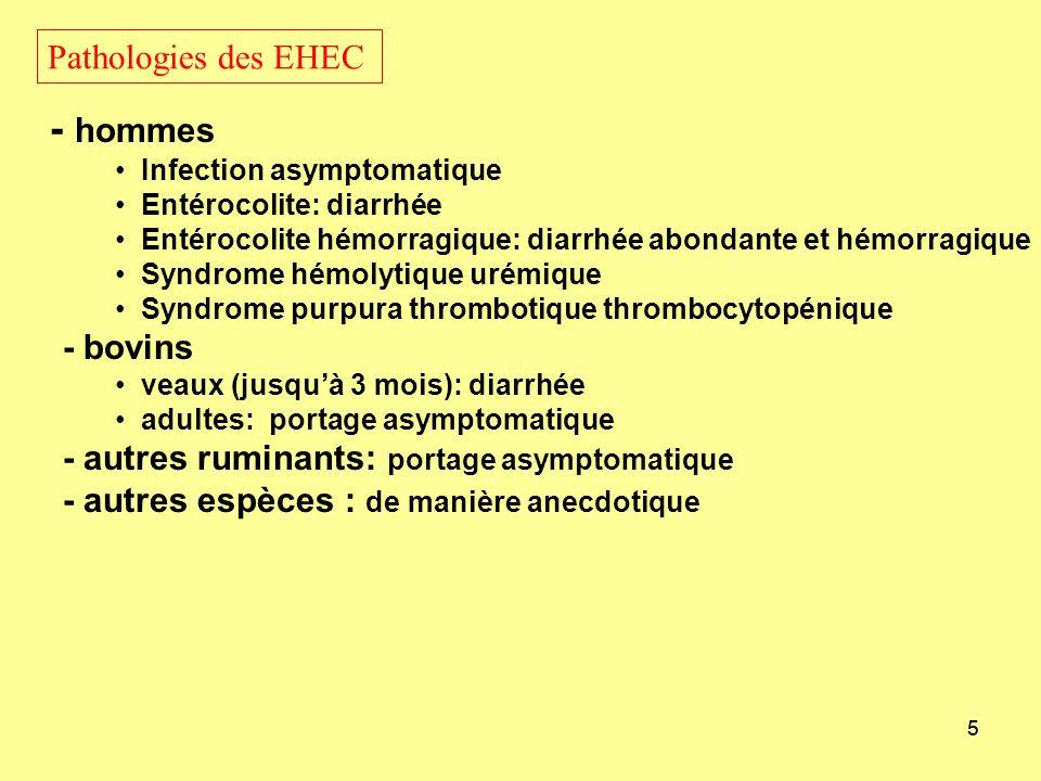 - hommes Pathologies des EHEC - bovins