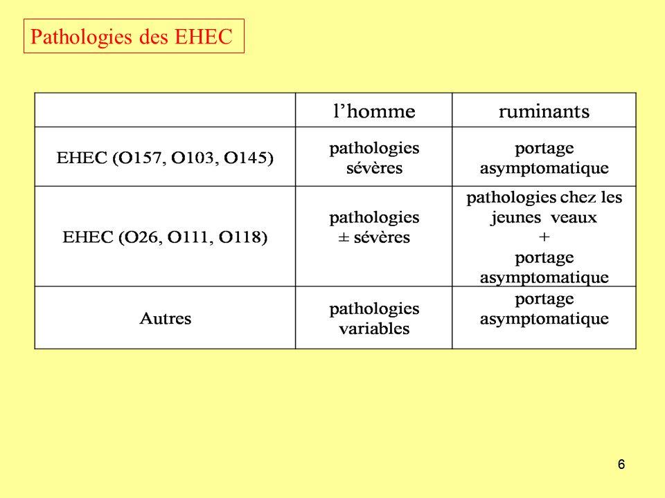 Pathologies des EHEC 6 Rôle de toxines Stx dans les pathologies d'EHEC