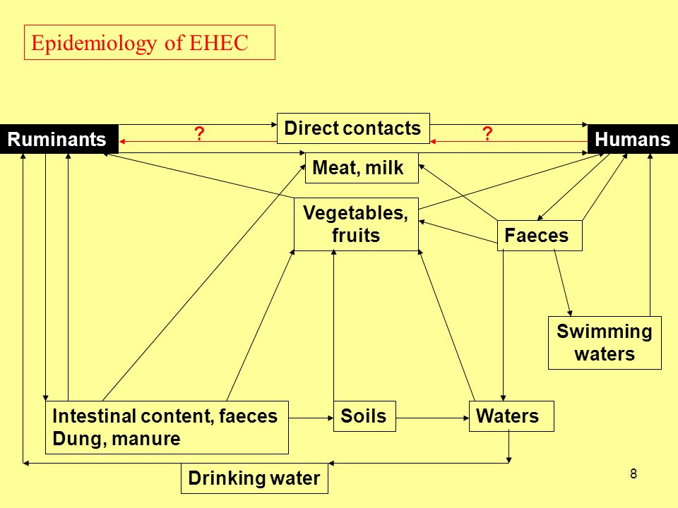 Epidemiology of EHEC Ruminants Humans Meat, milk Direct contacts