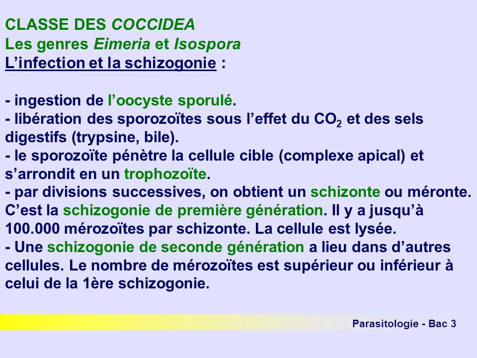Les genres Eimeria et Isospora L'infection et la schizogonie :