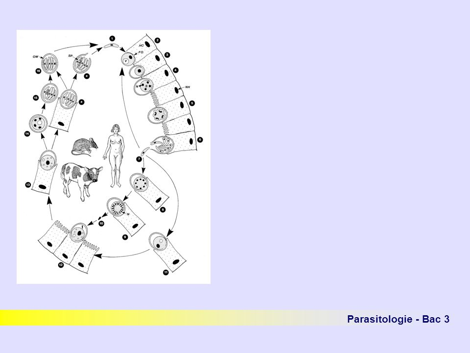 Fig1 p144 vol1 + P064 Parasitologie - Bac 3