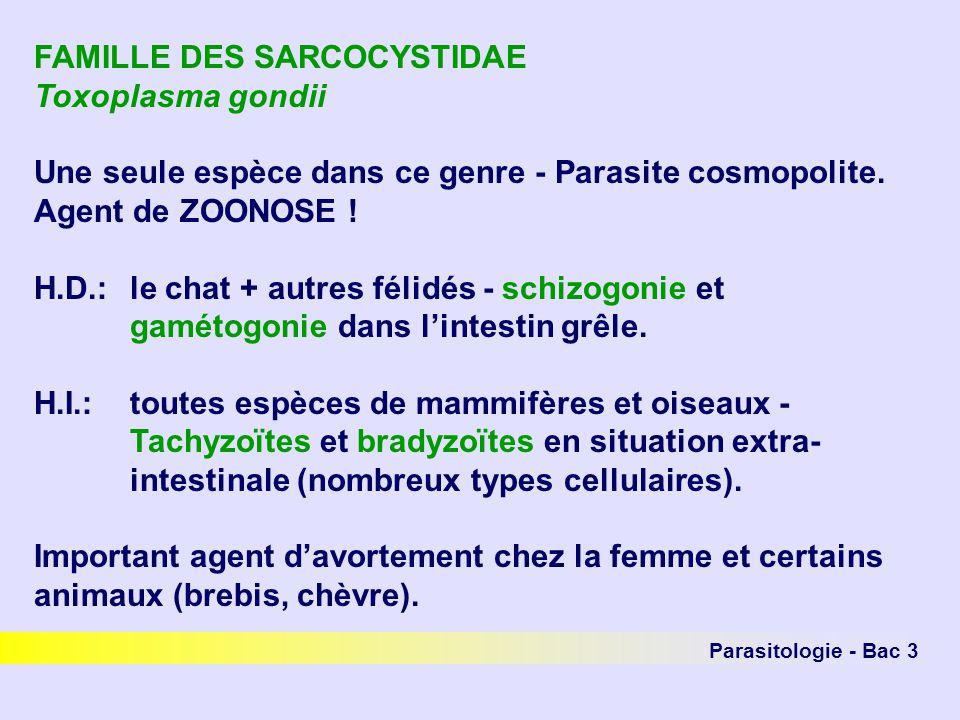 FAMILLE DES SARCOCYSTIDAE Toxoplasma gondii