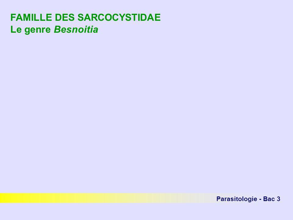 FAMILLE DES SARCOCYSTIDAE Le genre Besnoitia