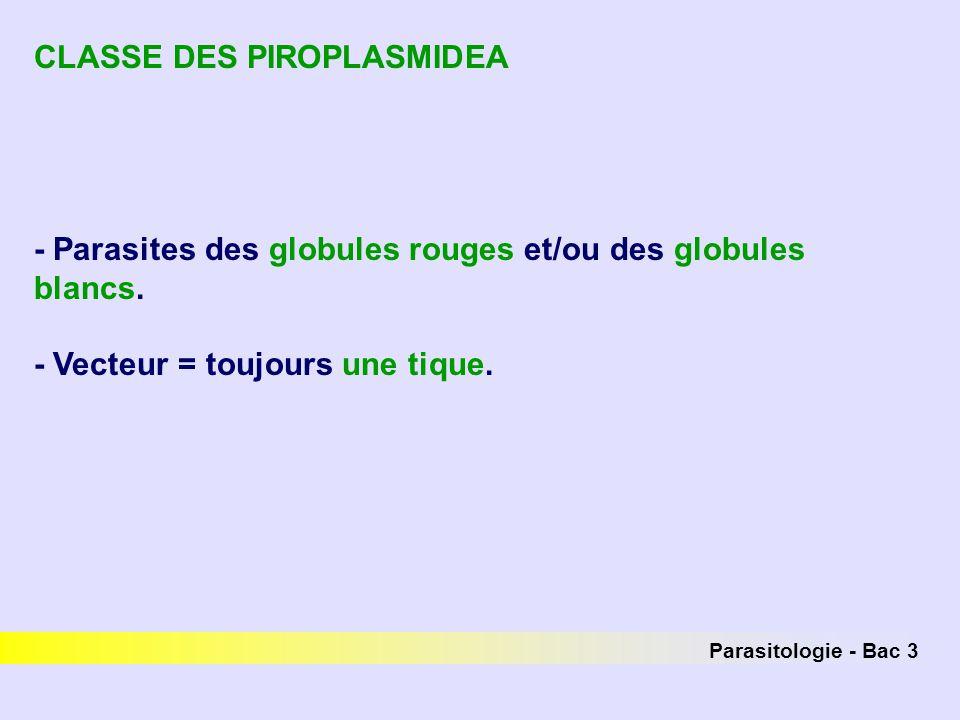 CLASSE DES PIROPLASMIDEA
