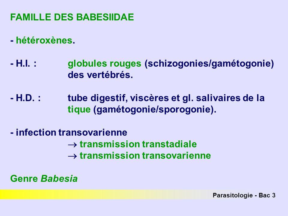 FAMILLE DES BABESIIDAE - hétéroxènes.