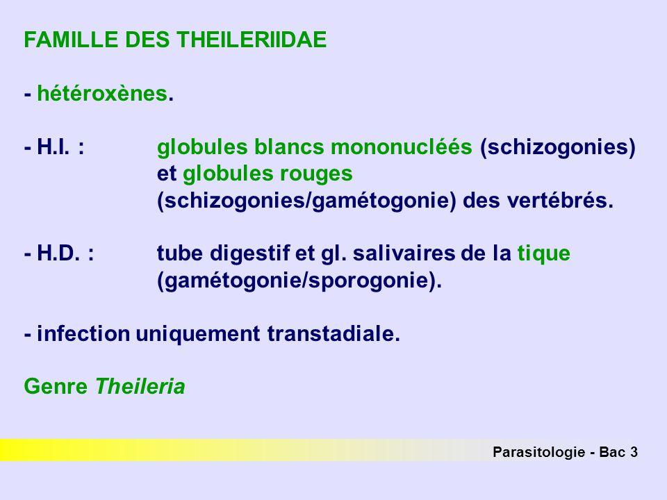 FAMILLE DES THEILERIIDAE - hétéroxènes.