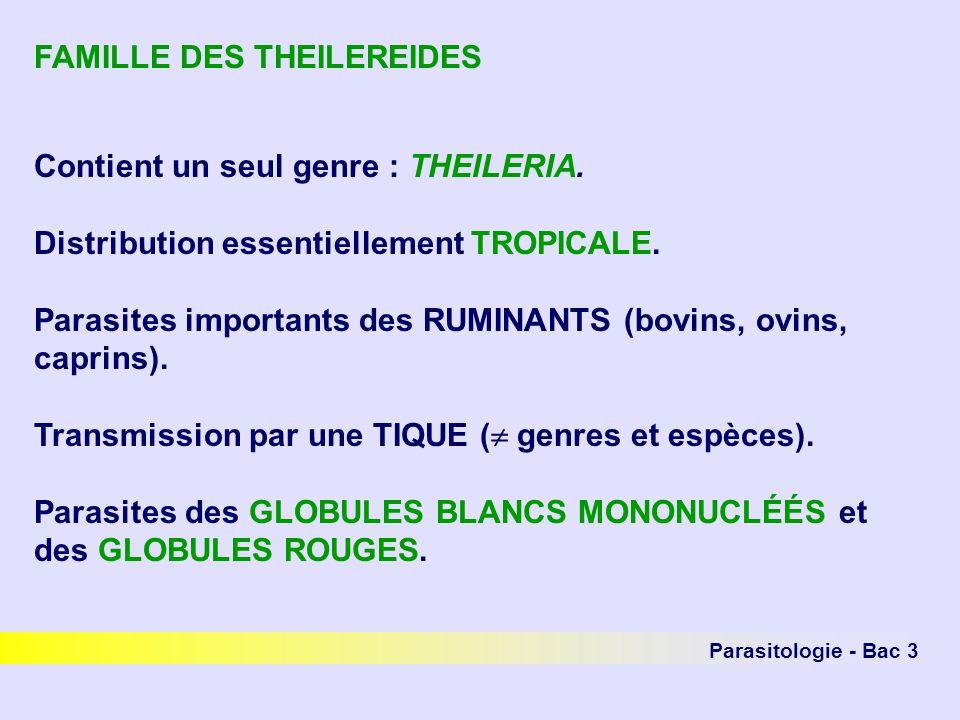 FAMILLE DES THEILEREIDES