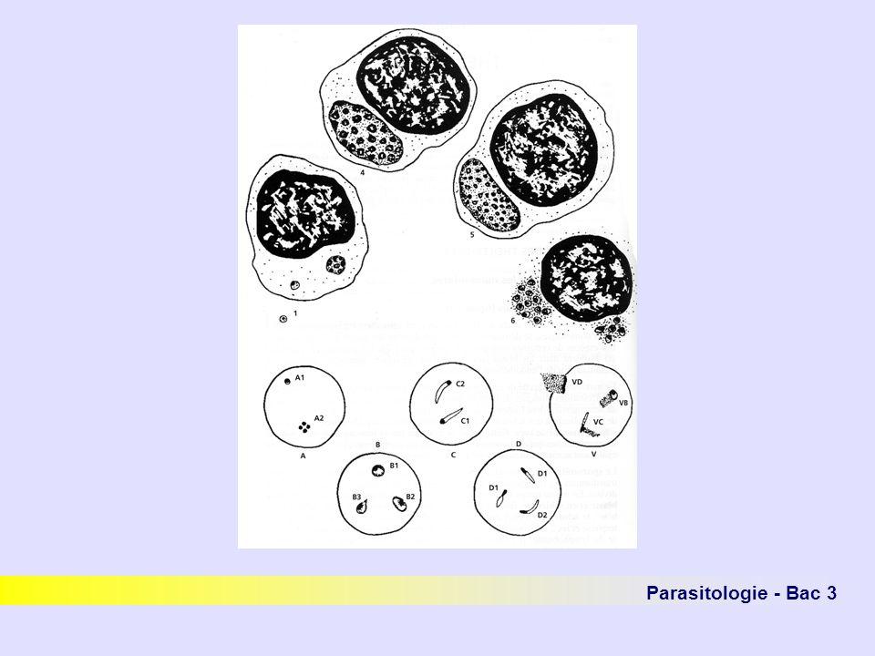 Fig5.1 p576 précis Parasitologie - Bac 3