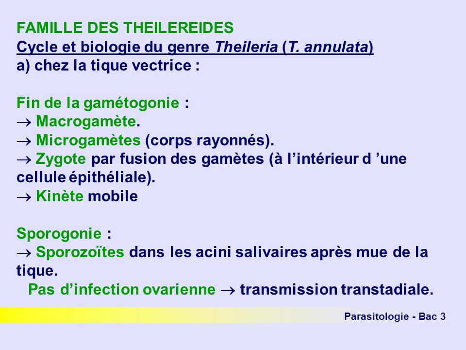 Pas d'infection ovarienne  transmission transtadiale.