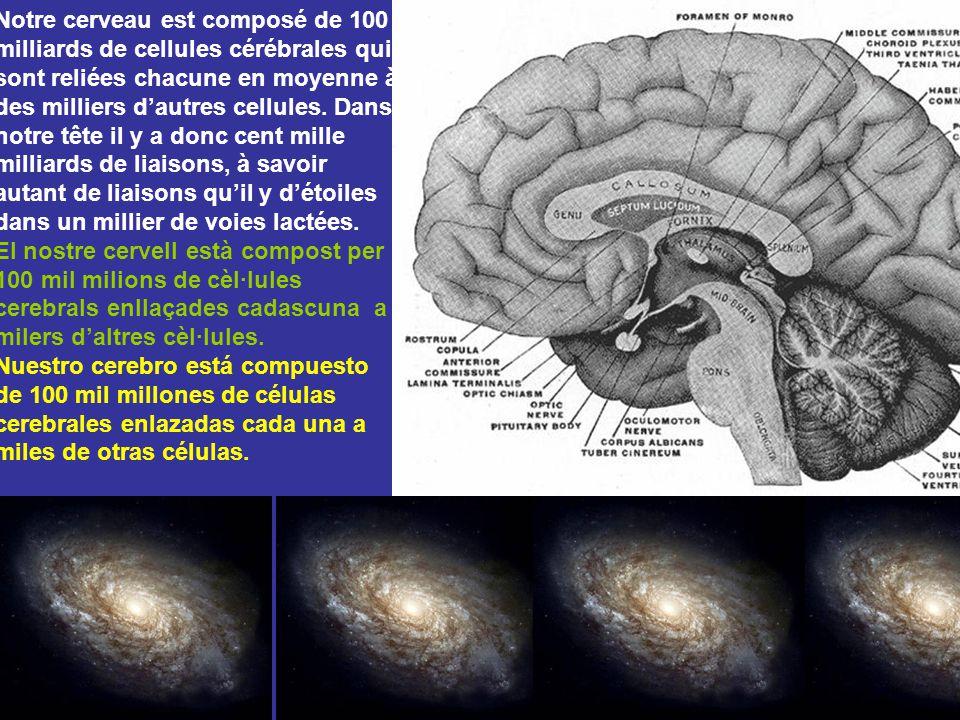 Notre cerveau est composé de 100 milliards de cellules cérébrales qui sont reliées chacune en moyenne à des milliers d'autres cellules. Dans notre tête il y a donc cent mille milliards de liaisons, à savoir autant de liaisons qu'il y d'étoiles dans un millier de voies lactées.