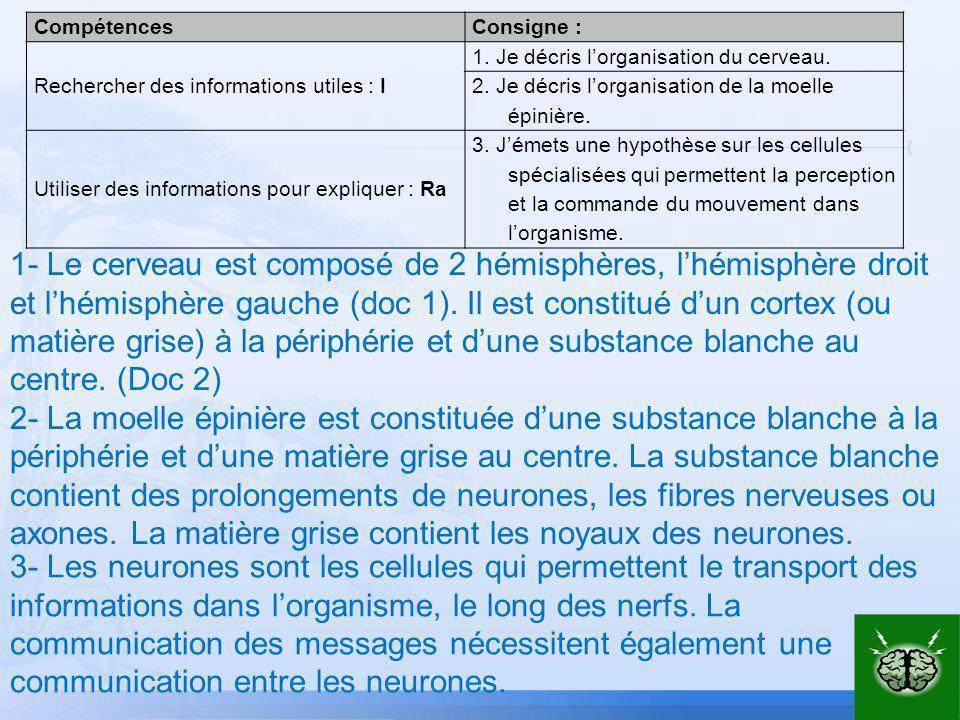 Compétences Consigne : Rechercher des informations utiles : I. 1. Je décris l'organisation du cerveau.