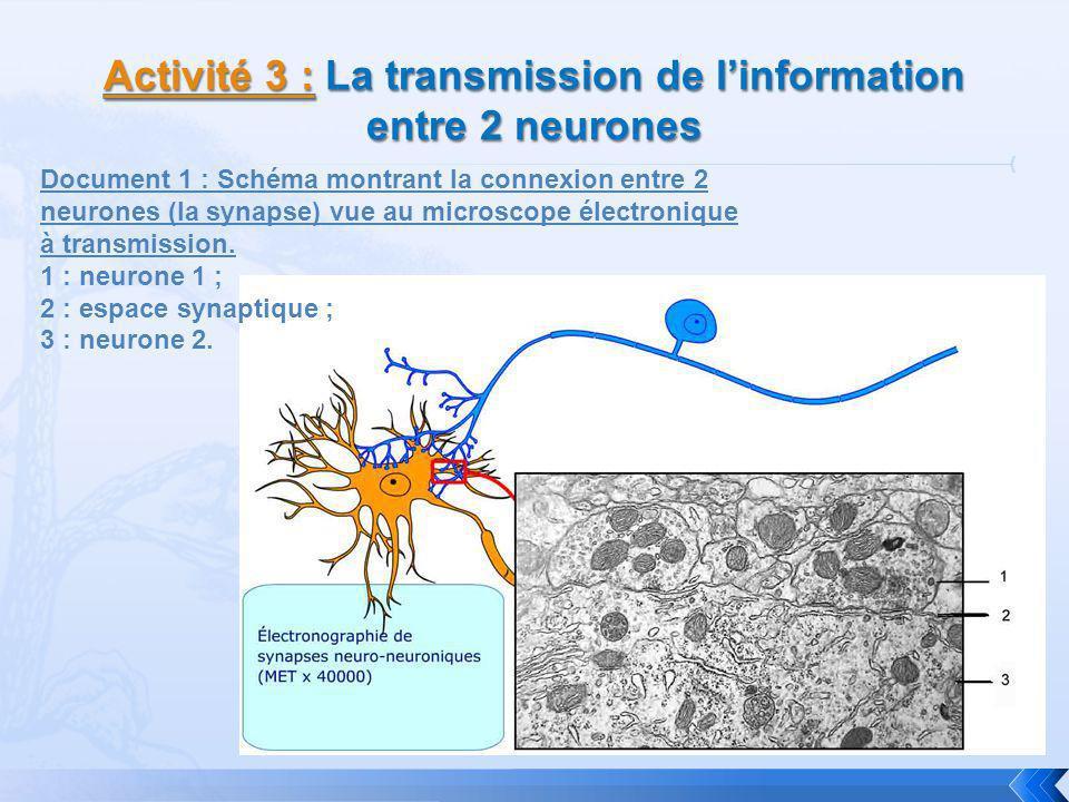 Activité 3 : La transmission de l'information entre 2 neurones