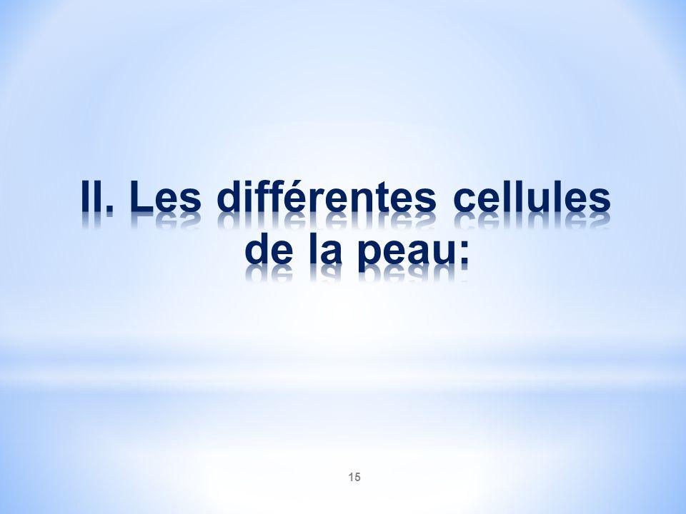 II. Les différentes cellules de la peau:
