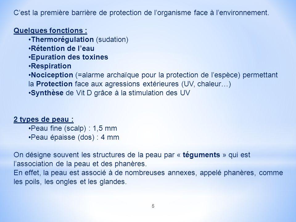 C'est la première barrière de protection de l'organisme face à l'environnement.