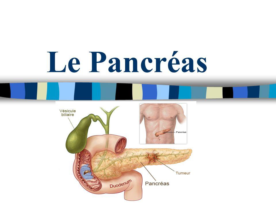 Le Pancréas