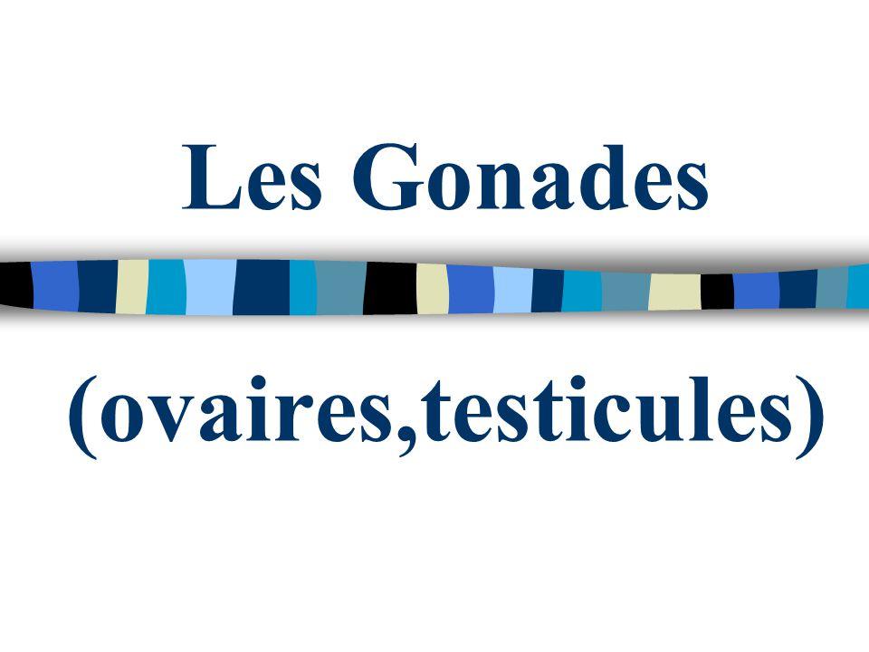 Les Gonades (ovaires,testicules)