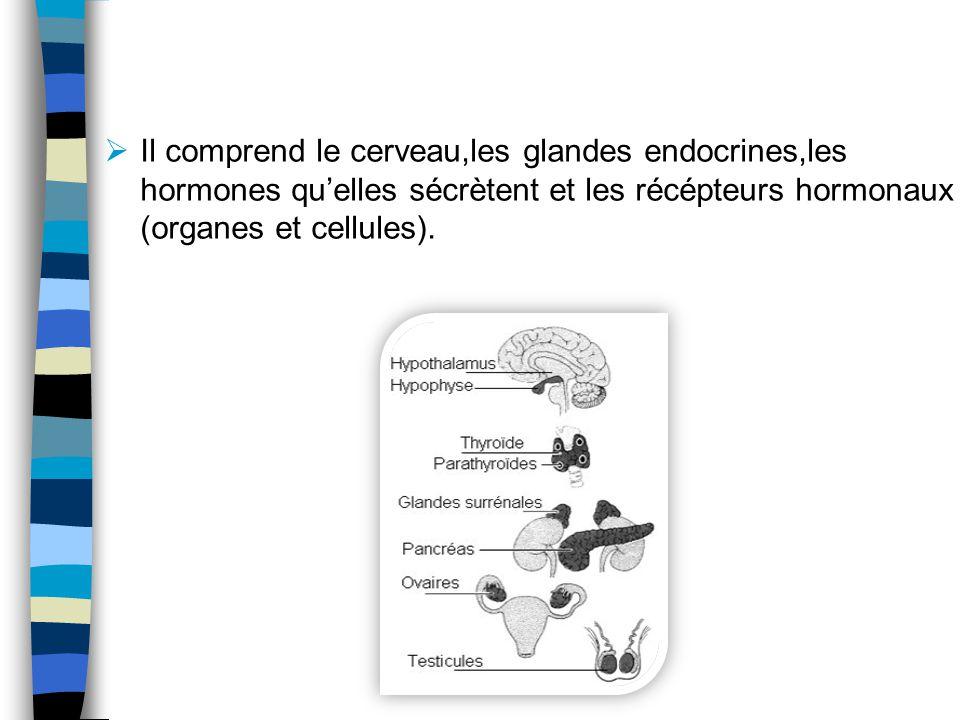 Il comprend le cerveau,les glandes endocrines,les hormones qu'elles sécrètent et les récépteurs hormonaux (organes et cellules).