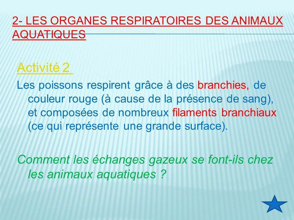 2- Les organes respiratoires des animaux aquatiques