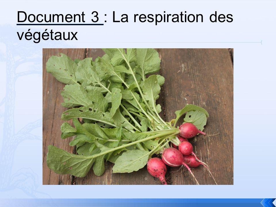 Document 3 : La respiration des végétaux