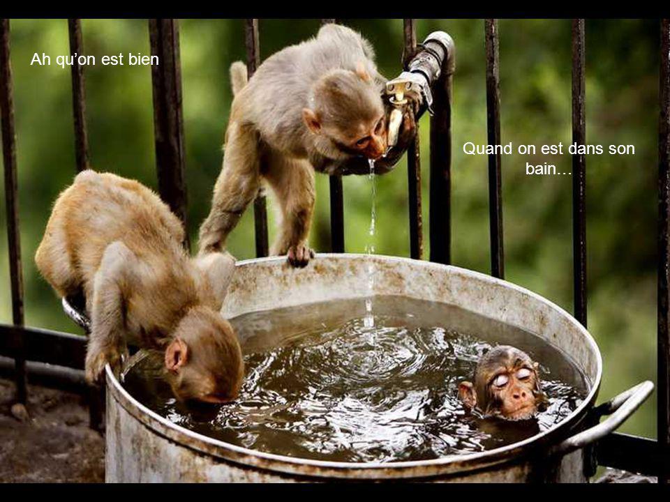 Quand on est dans son bain…