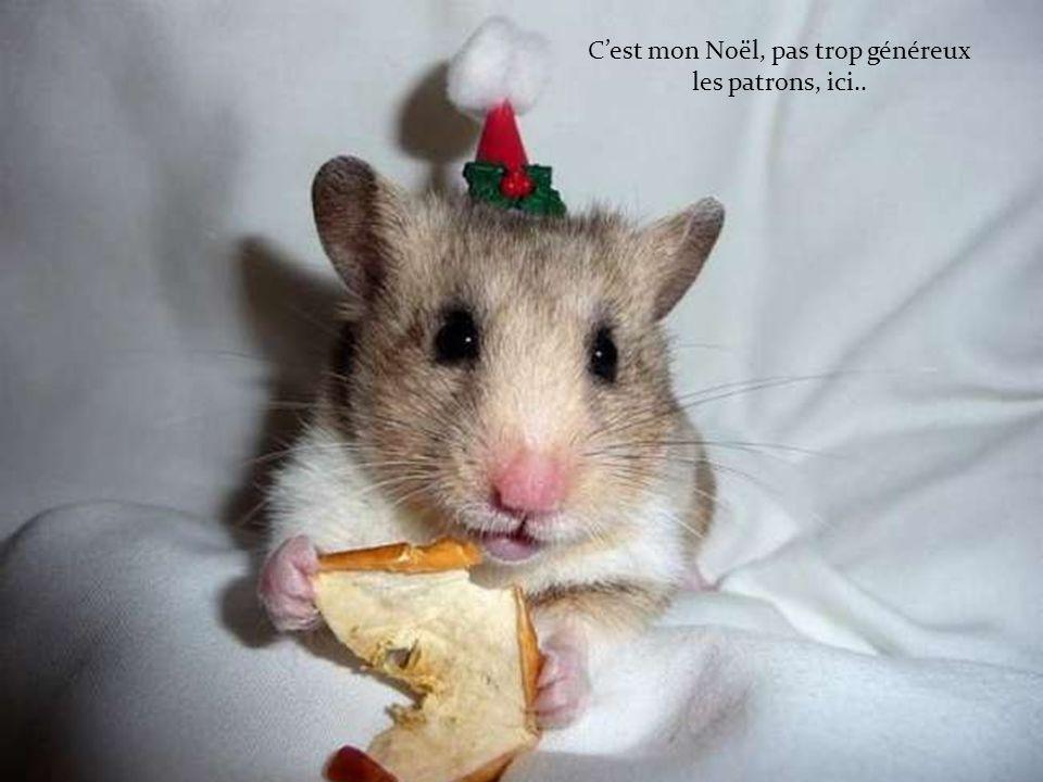C'est mon Noël, pas trop généreux les patrons, ici..